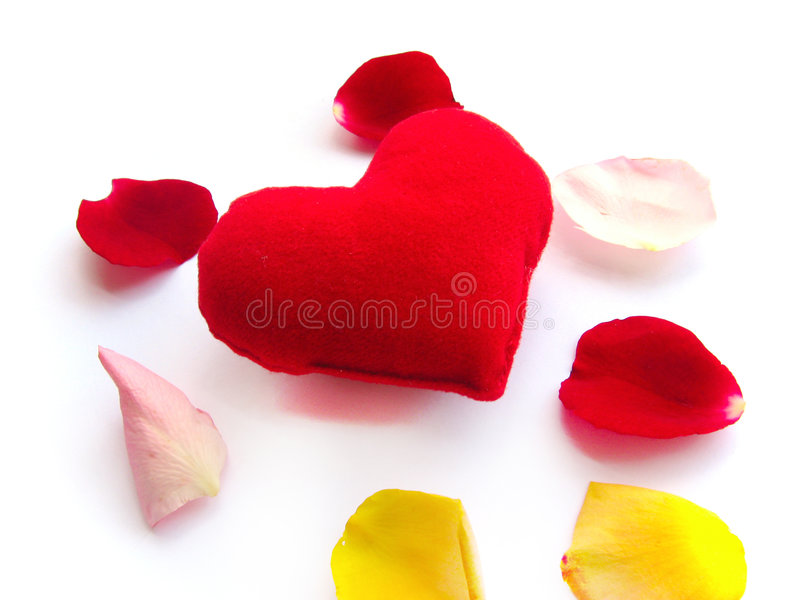 Care and love petal flower passion. Smell sensitive stock photo