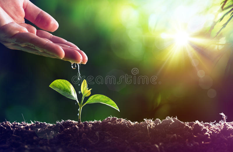 Care Of New Life royalty free stock images