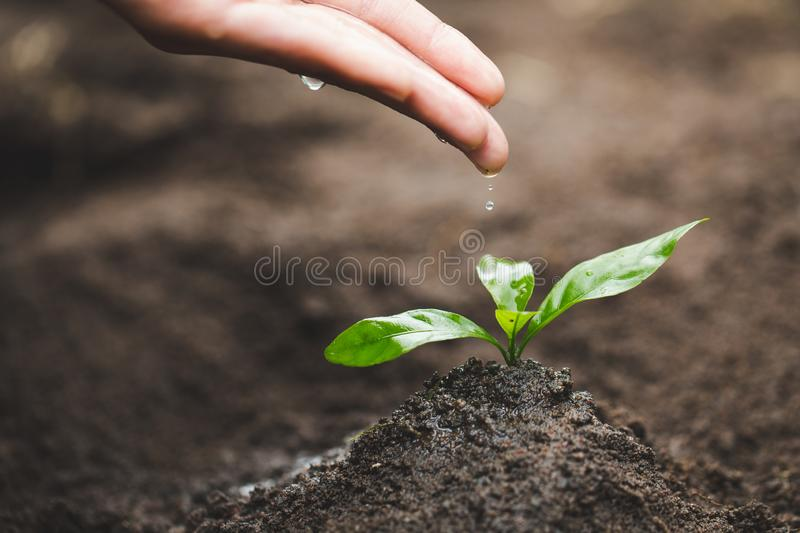 Care and watering the tree by hand, The hands are dripping water to the small seedlings, plant a tree, reduce global warming, stock photos
