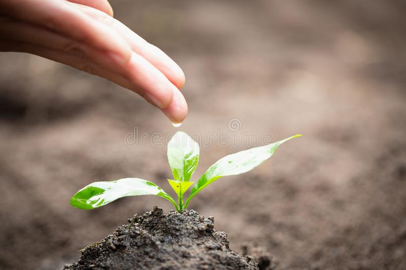 Care and watering the tree by hand, The hands are dripping water to the small seedlings, plant a tree, reduce global warming, stock photography