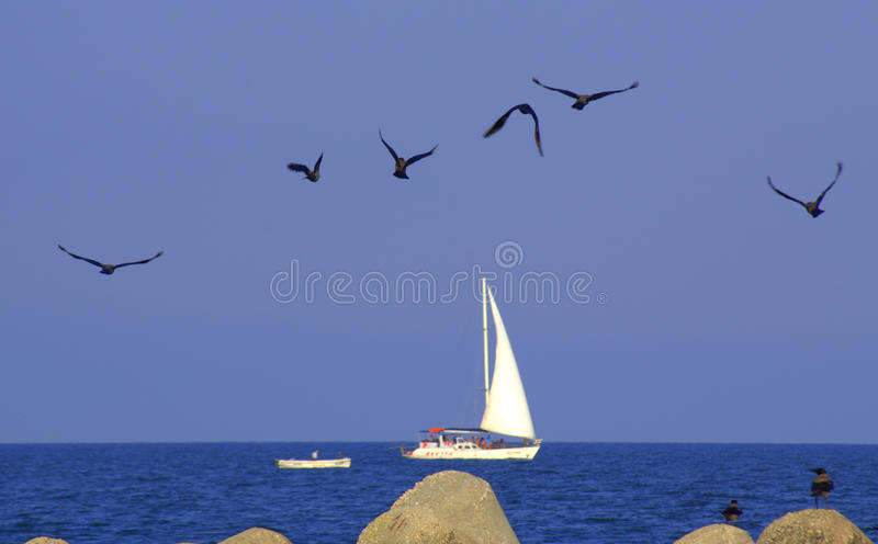 Carefree seaside birds and tourist boats. Careless black birds flying over concrete pier tetrapods blocks by blue sea with sailing tourist boats and blue sky royalty free stock images