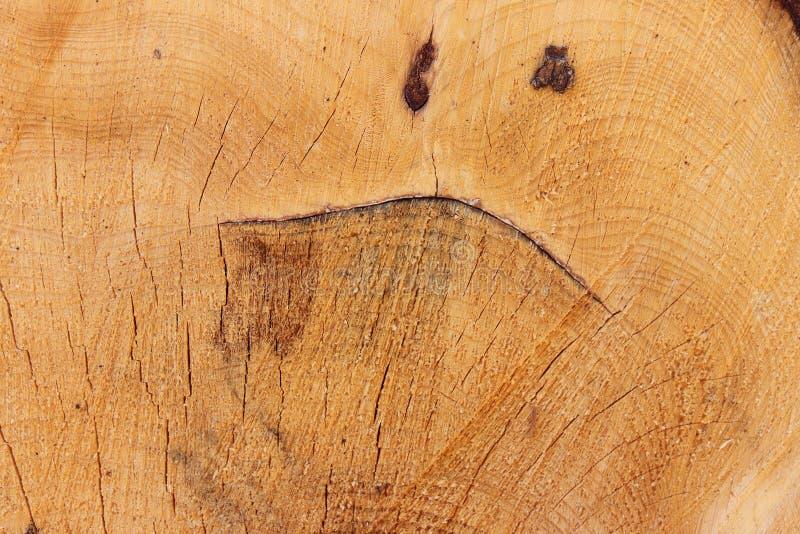 Careta no tronco de árvore cortado - cara engraçada imagens de stock