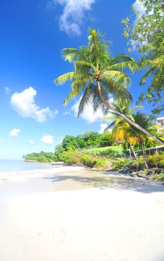caribbean fotos de archivo libres de regalías