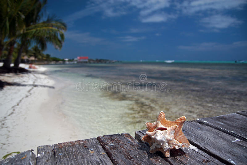 caribbean zdjęcia stock
