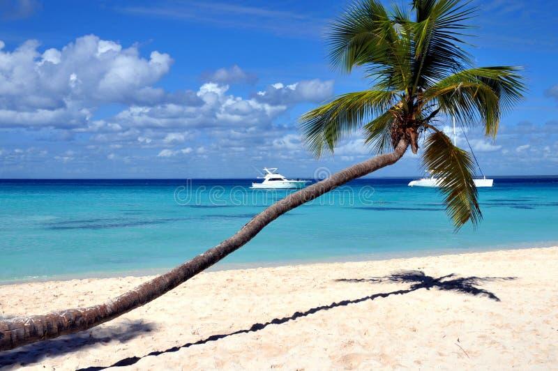 Caribbean beach. With palm tree royalty free stock photo