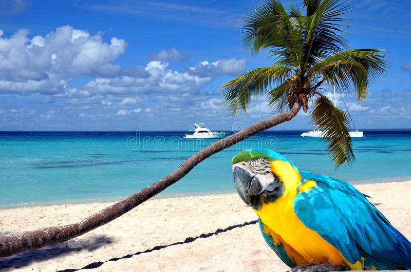 Caribbean beach. With palm tree and parrot royalty free stock photo