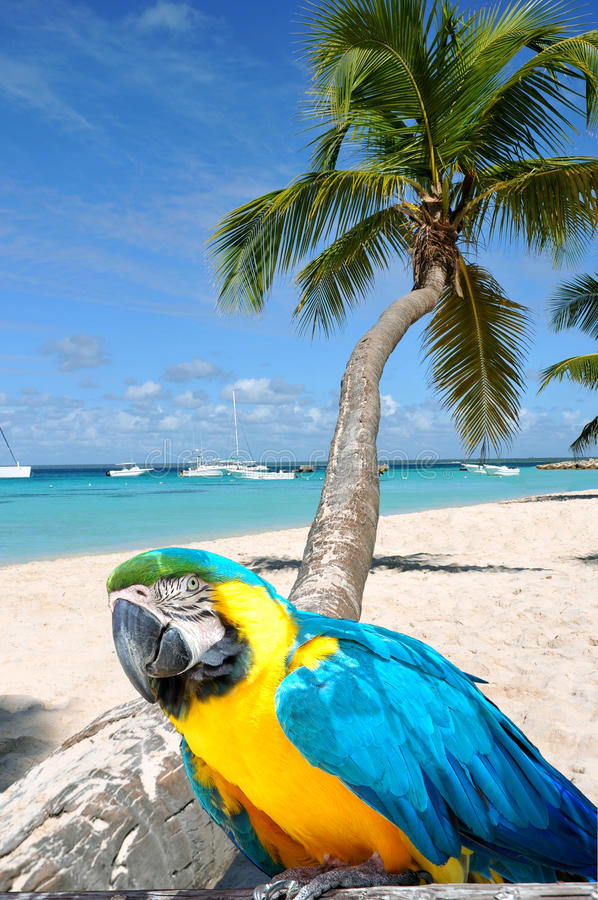 Caribbean beach. With palm tree and parrot stock image