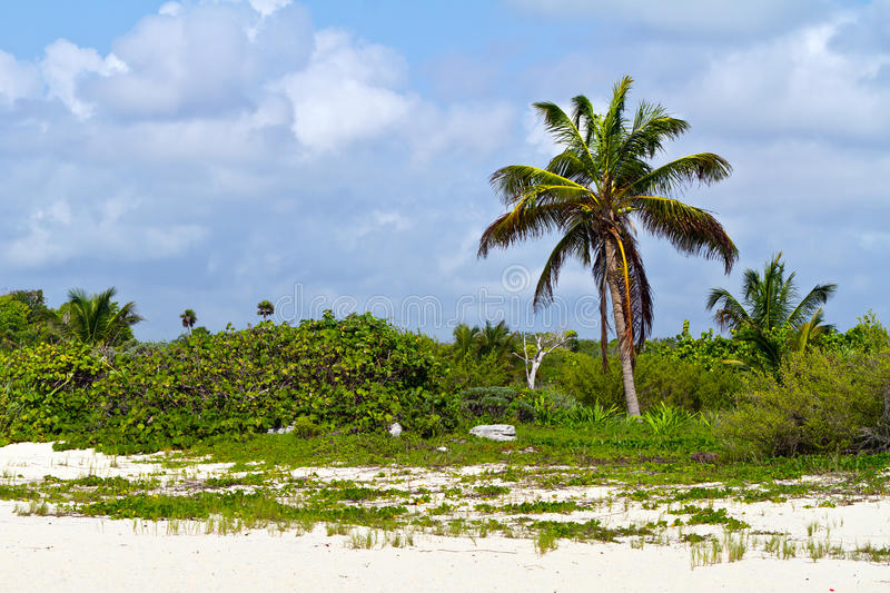 Download Caribbean beach stock photo. Image of sand, relax, plant - 21936836