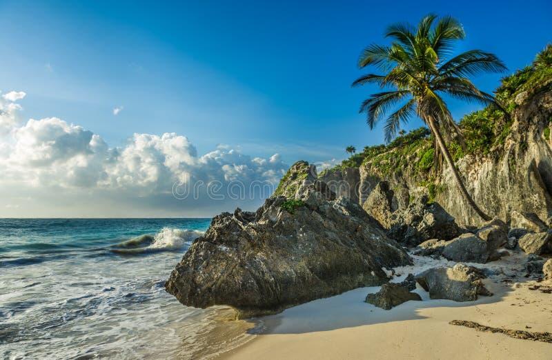 Caribbean beach with coconut palm, Tulum, Mexico stock photography
