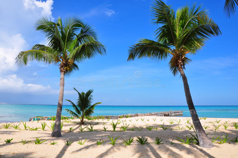Caribbean Beach, Mexico. Caribbean beach on the island Isla Mujeres, Mexico stock photos