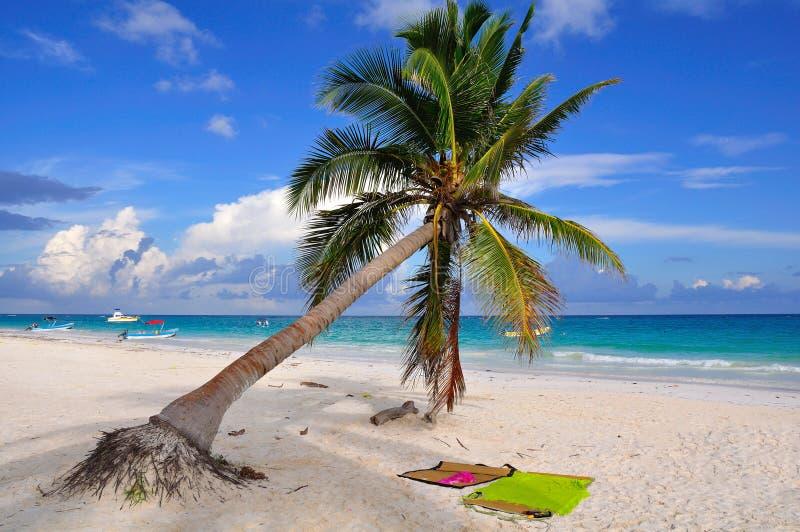 Caribbean Beach, Mexico. Caribbean beach on the shore of Tulum, Mexico royalty free stock photography