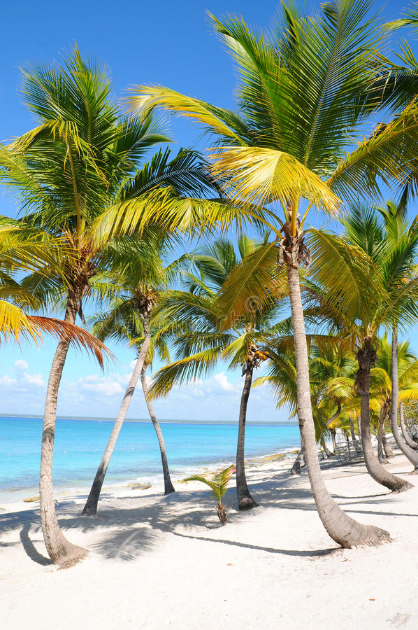 Download Caribbean Beach With Palm Tree Stock Photo - Image: 18499890