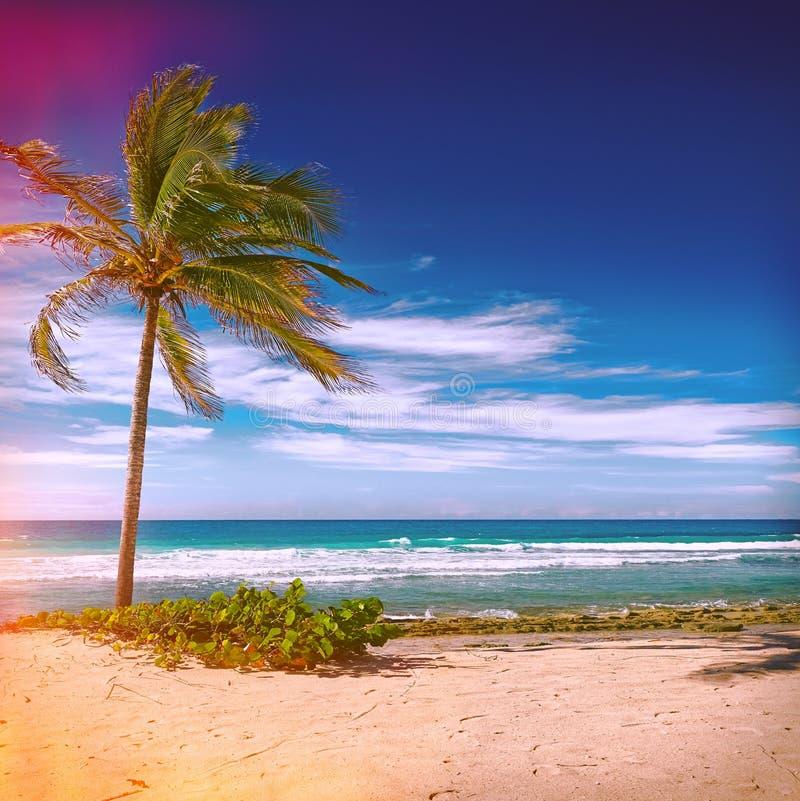 Caribbean beach and tropical sea in Haiti. Caribbean beach with palm and tropical sea in Haiti stock photography