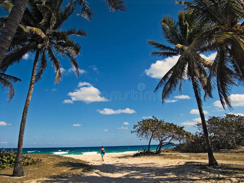 Caribbean beach with palms stock photography