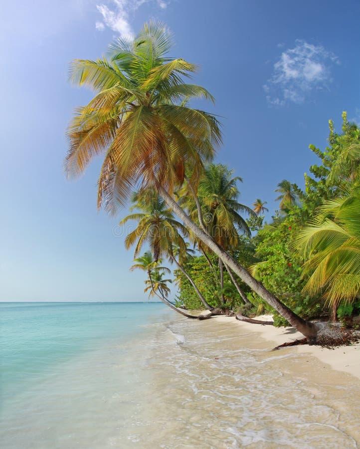 Caribbean Beach: Beach Of Castara Village Tobago Stock Image
