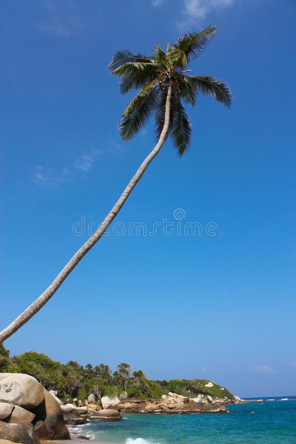 Caribbean beach with tropical forest. Colombia royalty free stock photography