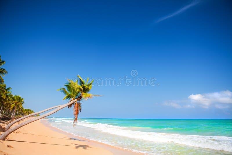 Download Caribbean Coast Stock Image - Image: 12159441