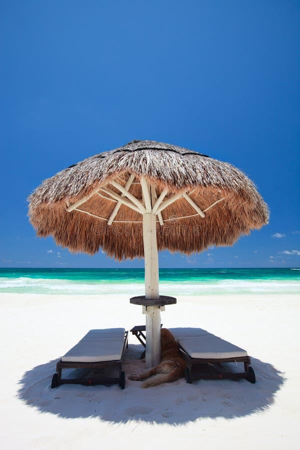 Download Caribbean coast stock photo. Image of tulum, exotic, beautiful - 20518690