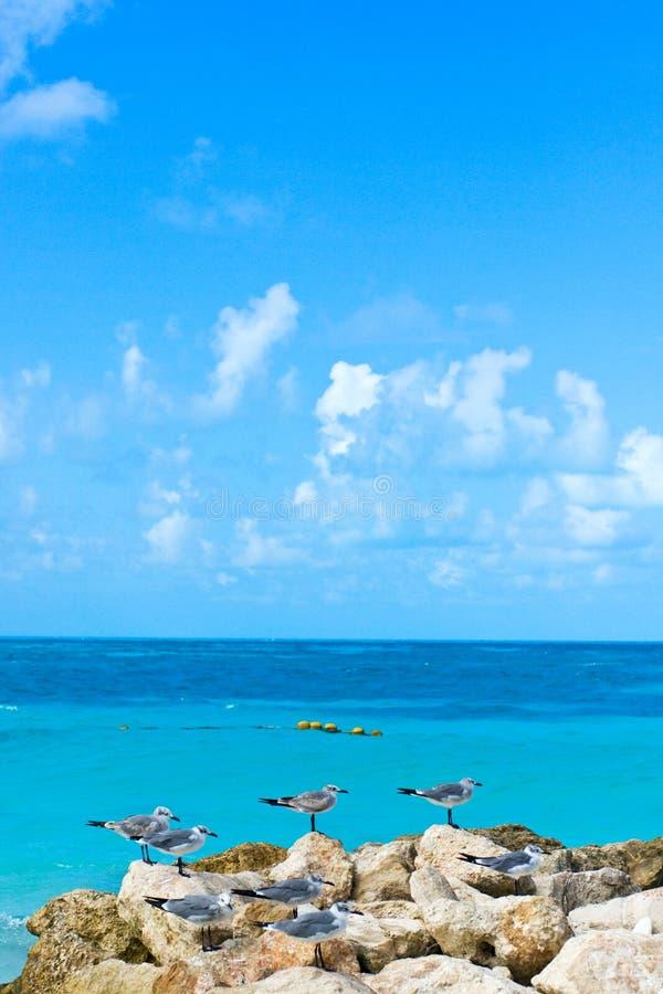 Caribbean_coastline stock foto's