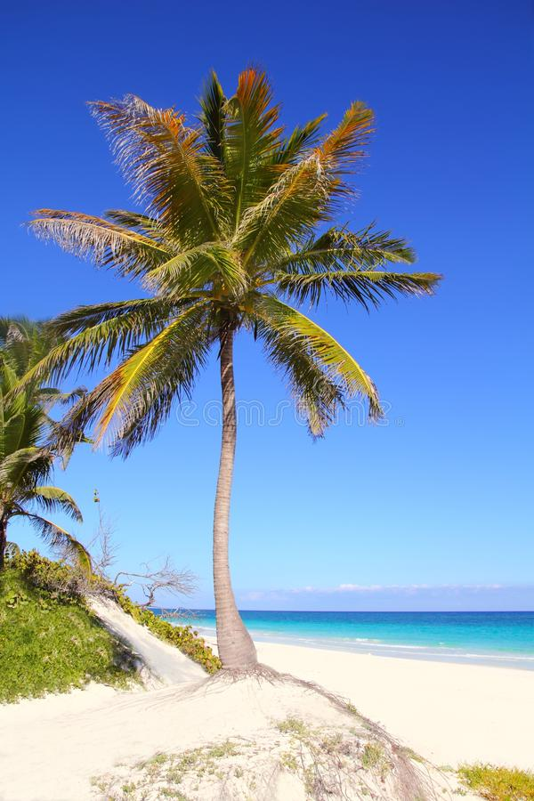 Caribbean coconut palm trees in tuquoise sea stock image