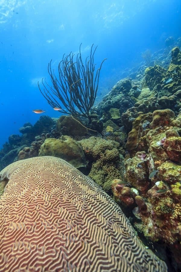Free Caribbean Coral Garden Stock Photography - 182196712