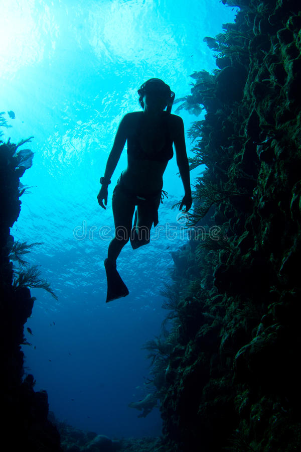 Caribbean Freediver stock photography