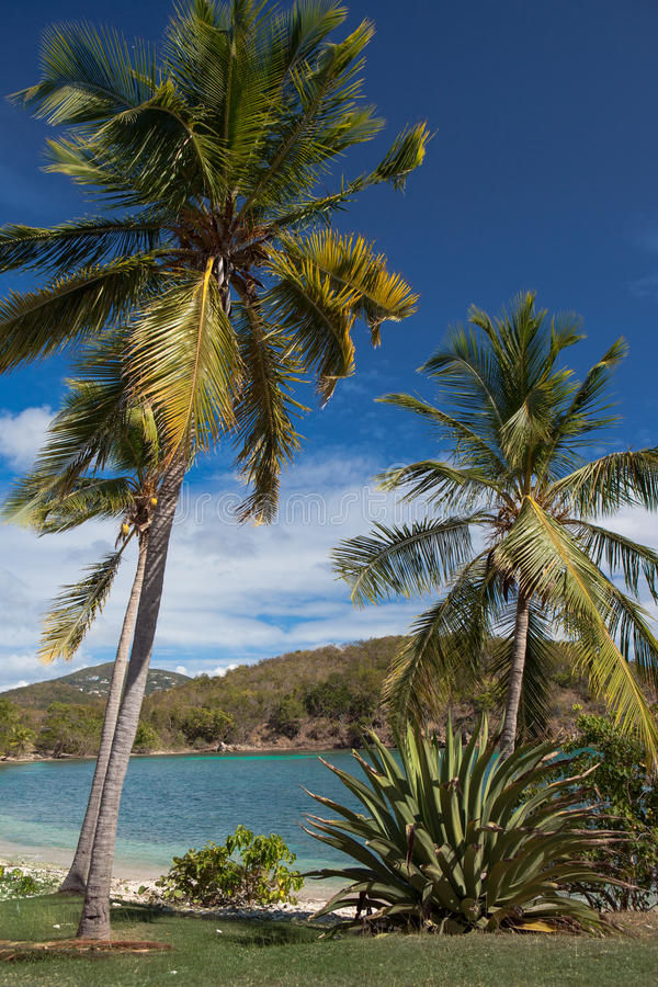 Download Caribbean Harbor Surrounded By Coconut Palm Trees Stock Image - Image: 31113341