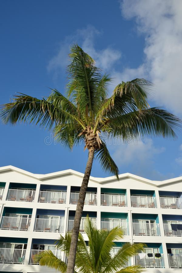 Caribbean hotel with coconut tree royalty free stock photo