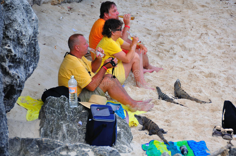 Caribbean Iguanas and Tourists, Mexico royalty free stock image