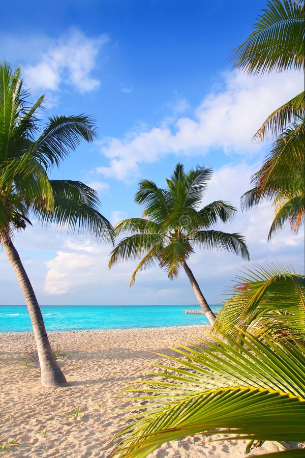 Caribbean North Beach Palm Trees In Mexico Royalty Free Stock Image