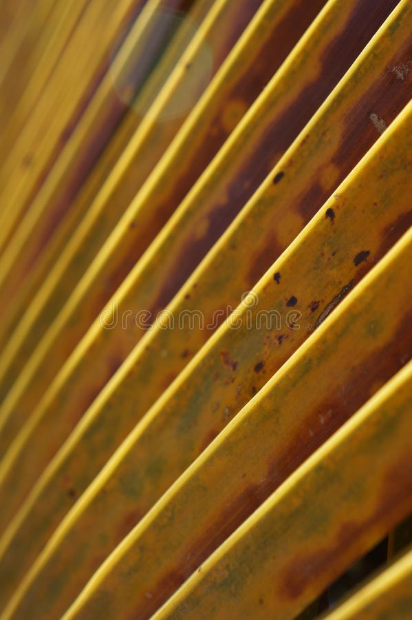 Caribbean Palm royalty free stock photography
