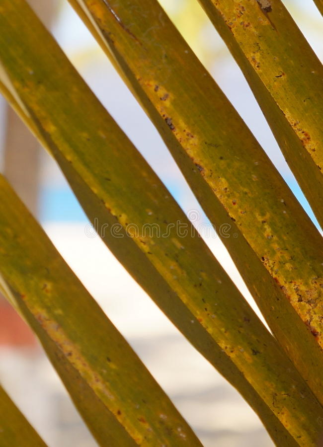 Caribbean Palm royalty free stock images