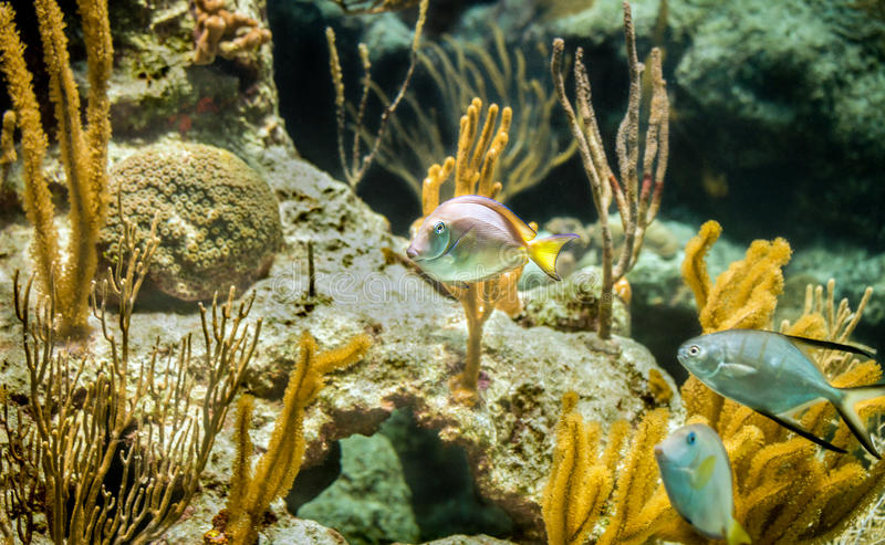 Caribbean reef stock photo