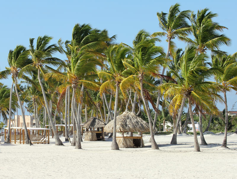 Download Caribbean resort stock image. Image of blue, tree, vacations - 23593263