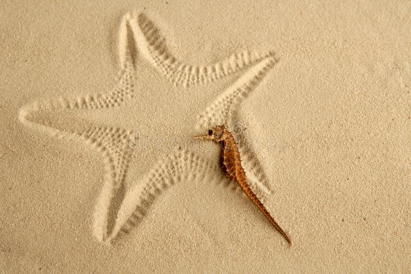 Download Caribbean Sand Seahorse Over Starfish Footprint Stock Photo - Image: 12292258