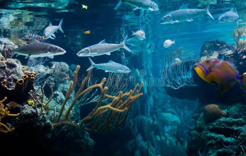 Download Caribbean Sea Life stock image. Image of bottom, marine - 26209019
