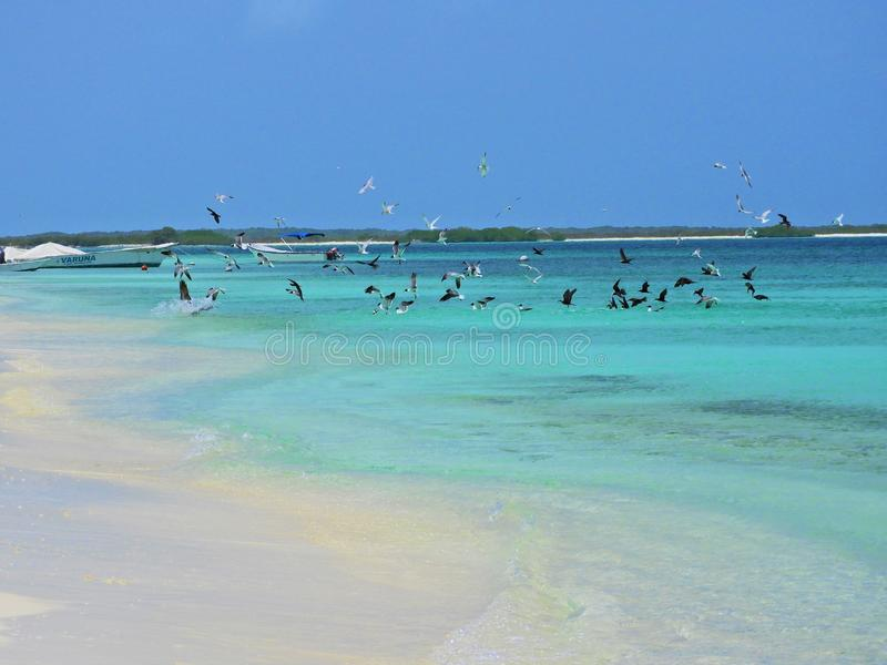 Caribbean sea, Los Roques. Vacation in the blue sea and deserted islands. royalty free stock photos
