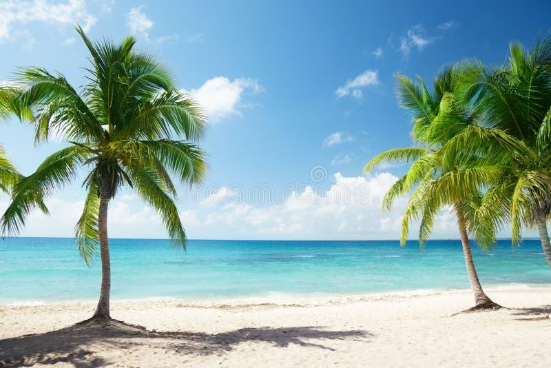 Download Caribbean sea and palms stock photo. Image of atlantic - 21714820
