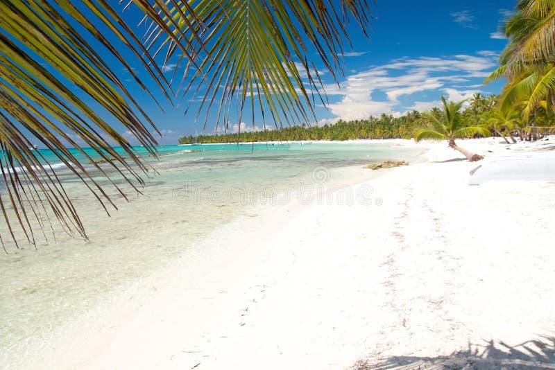Download Caribbean Sea With White Sand On Island Saona Stock Photo - Image: 16673410