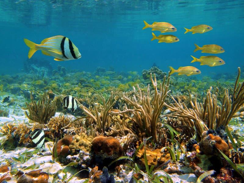 Download Caribbean Sea Wildlife Stock Photos - Image: 21456923