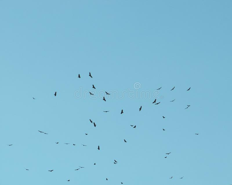 Caribbean seagull fly freely at the sky royalty free stock images