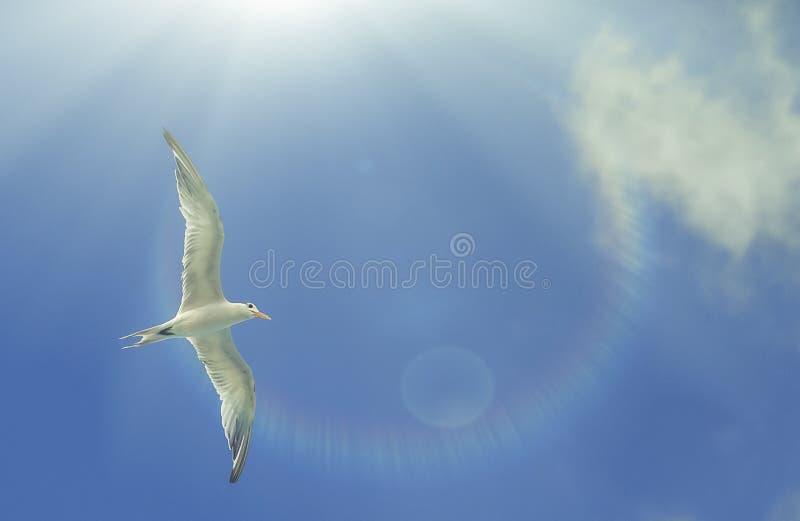 Caribbean seagulls stock photo