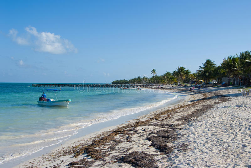 Caribbean shore royalty free stock image