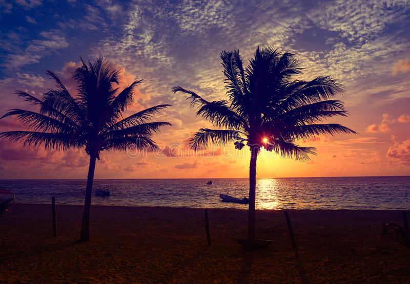 Caribbean sunrise palm trees Riviera Maya. Caribbean sunrise palm trees in Riviera Maya Mayan Mexico stock images