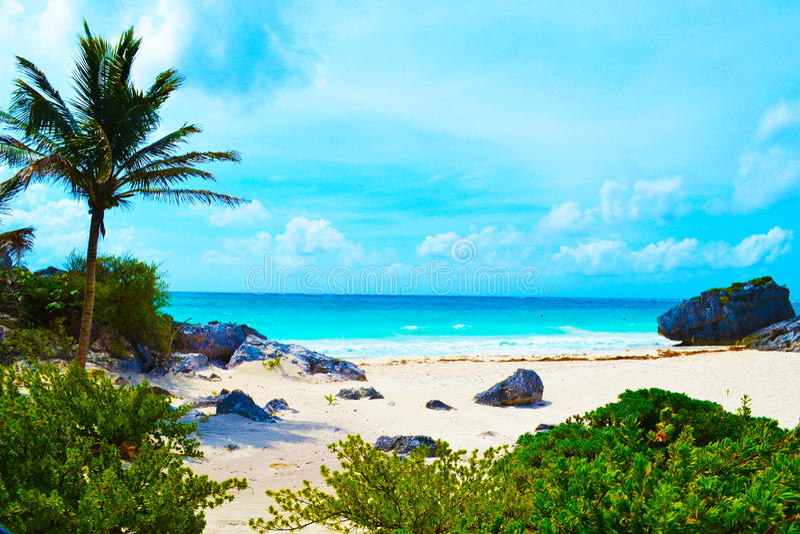 Caribbean wildlife - paradise places royalty free stock image