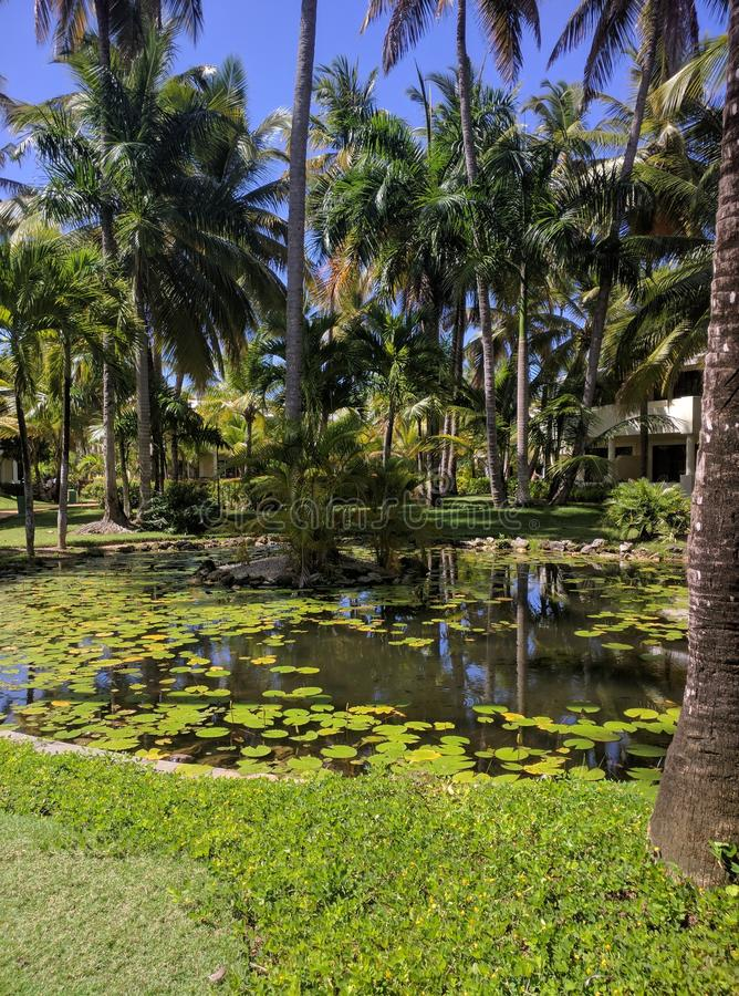 Caribean trädgård arkivfoto