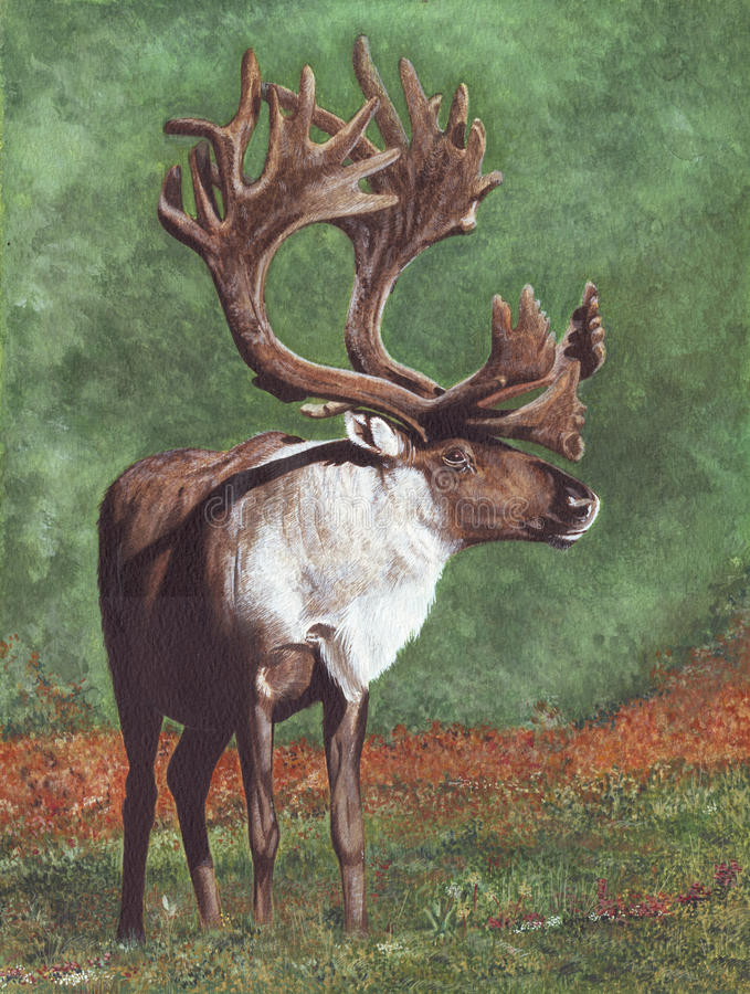 Download Caribou stock illustration. Image of paint, artistic, artist - 9639839