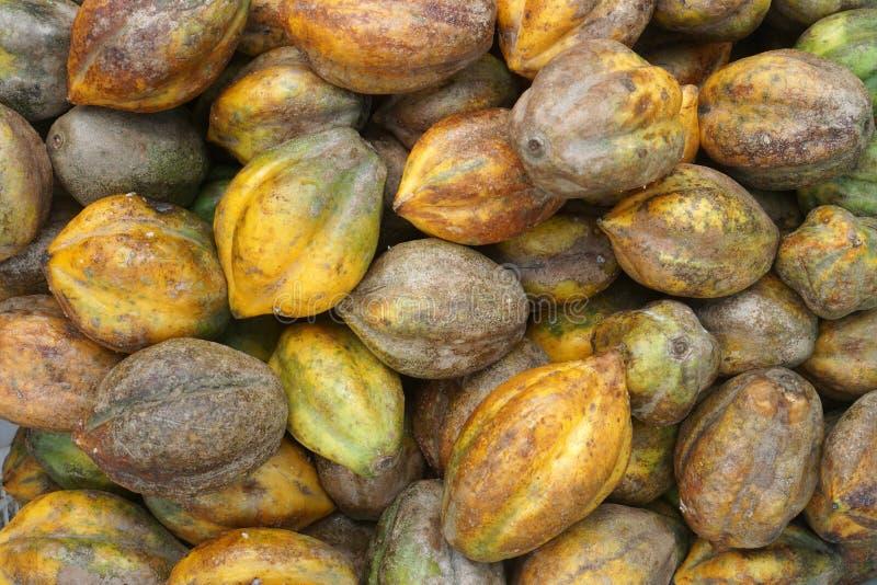 Carica是果子相似与生长Wonosobo,印度尼西亚的番木瓜 库存照片