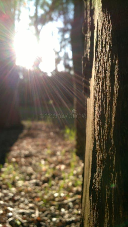 Caricia del sol fotos de archivo libres de regalías
