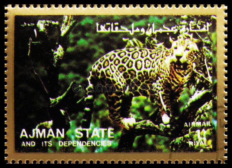 Carimbo impresso em Ajman (Emirados Árabes Unidos) mostra Leopard (Panthera pardus), Mammals, serie de grande formato, cerca de 1 imagem de stock